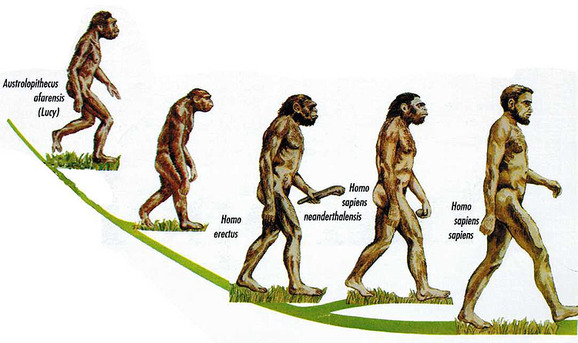 Did humans evolve from apes yahoo dating 5